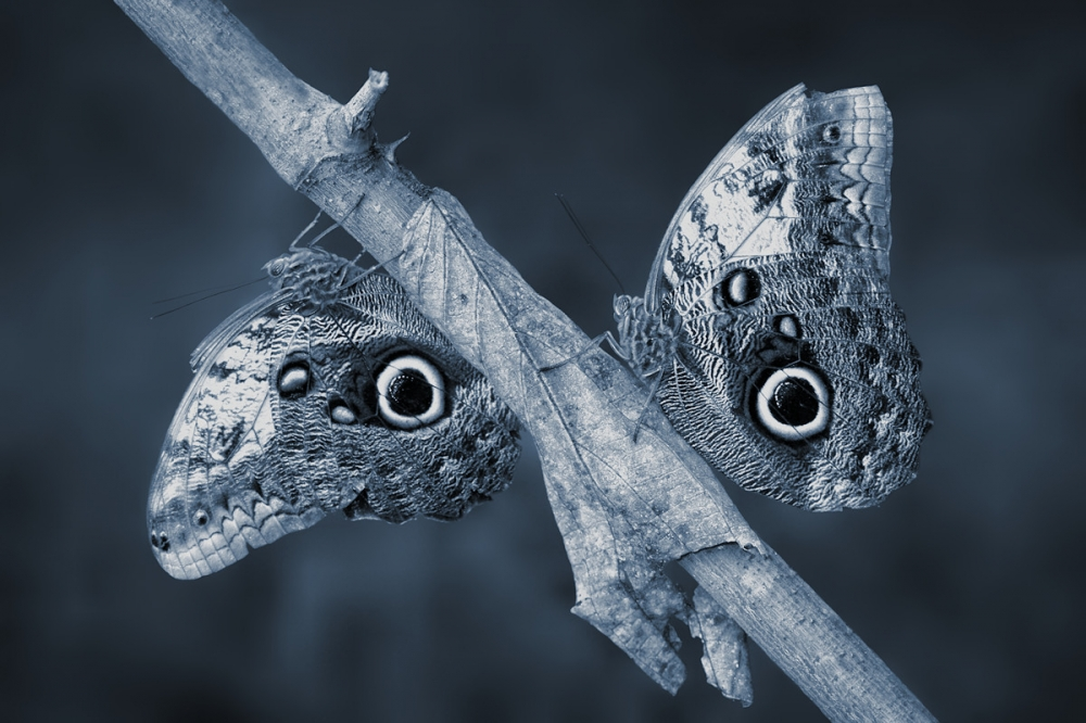 A piece of fine art art photography titled Jungle-face by Jimmy Hoffman