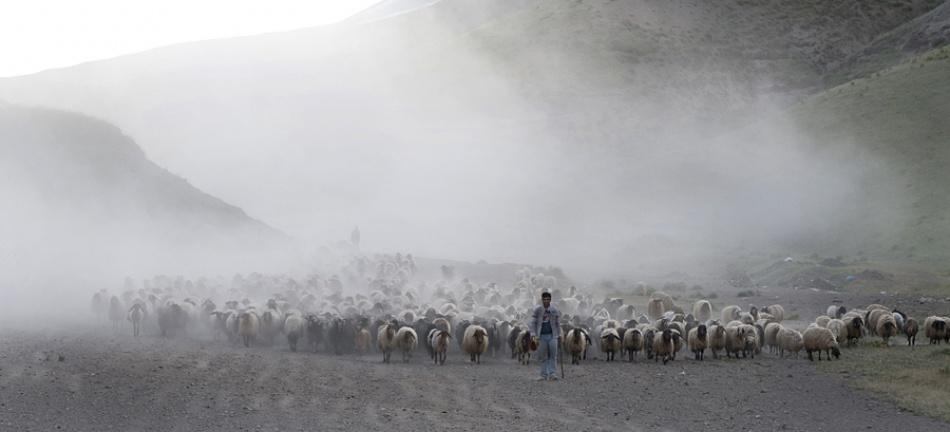 A piece of fine art art photography titled Herd by Ridvan Celik