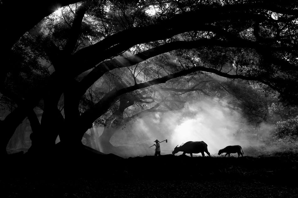 A piece of fine art art photography titled Farmer With His Buffalos by JINNY TAN