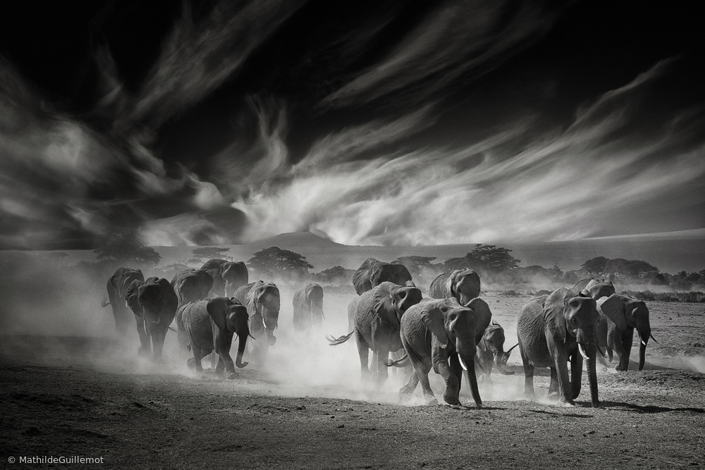 The sky, the dust and the Elephants
