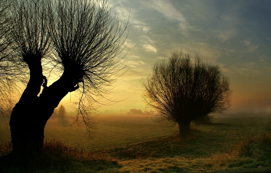 A piece of fine art art photography titled Morning Willow by Janusz Wanczyk