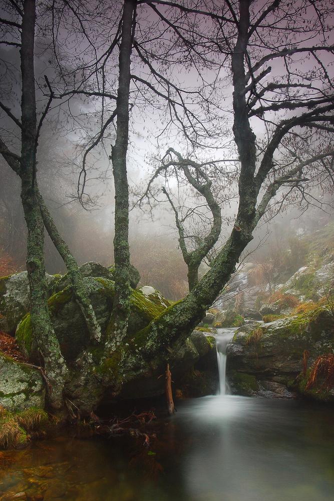 A piece of fine art art photography titled  Nature  by Juan Pavon