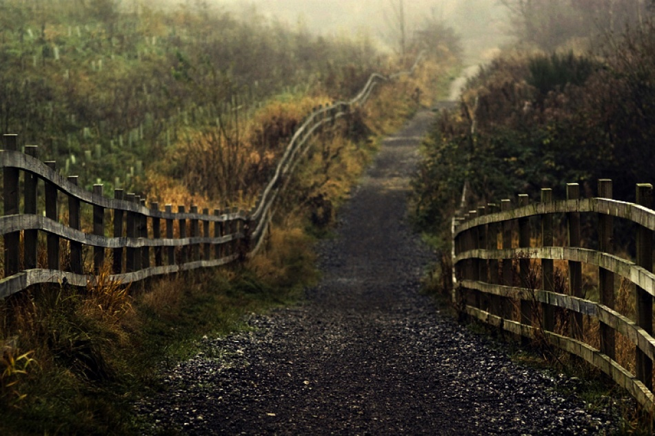 A piece of fine art art photography titled A Way by Piotr Haskiewicz