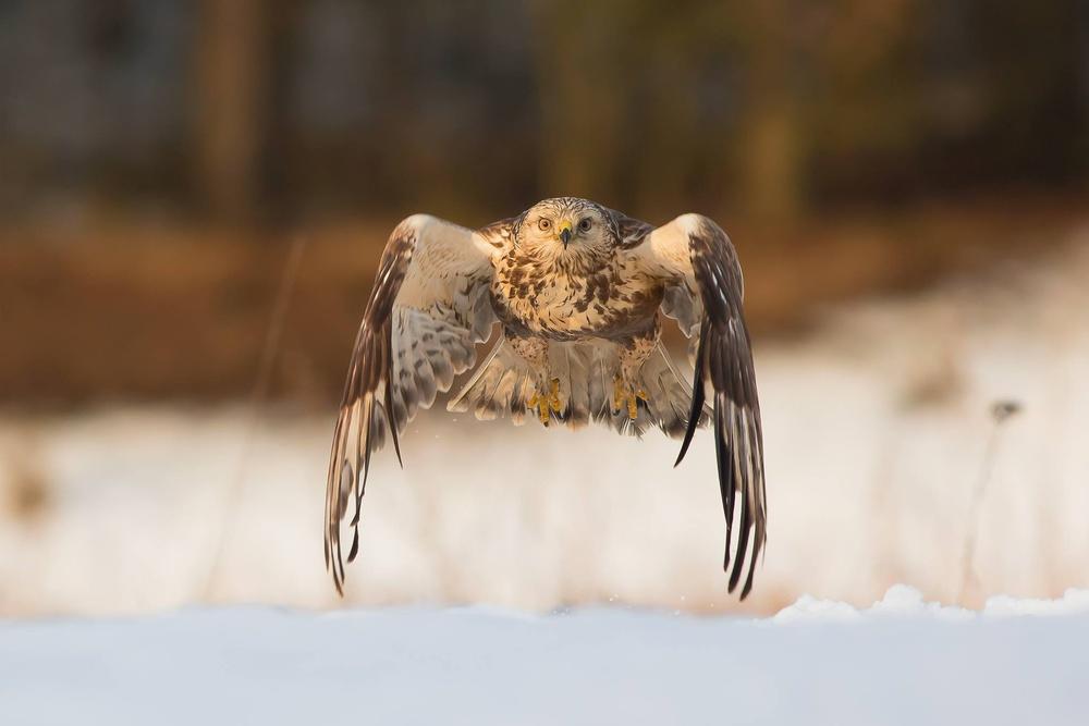 A piece of fine art art photography titled Like an Owl by Lukasz Sokol