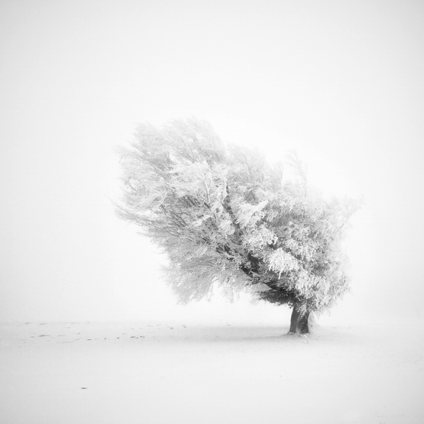 A piece of fine art art photography titled Frozen Life by Michael Schlegel