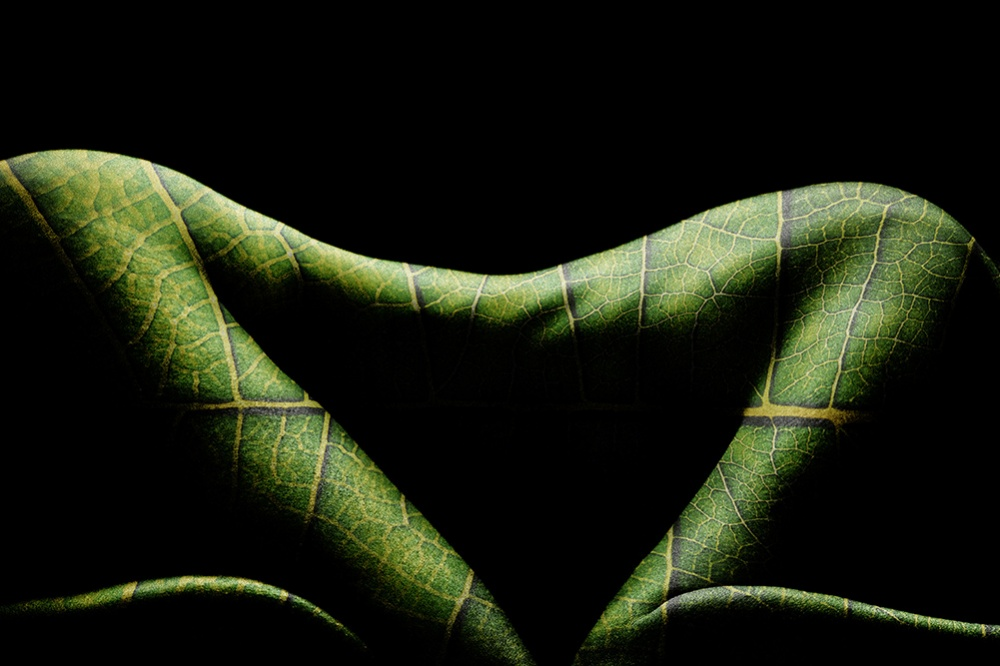 A piece of fine art art photography titled Reptile Body by Kristian Liebrand