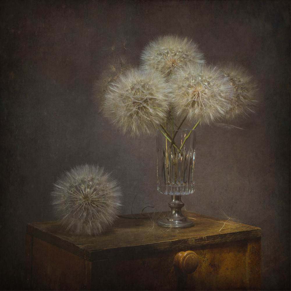 A piece of fine art art photography titled Still Life With Dandelion by Iwona Czubek
