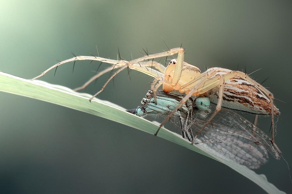 A piece of fine art art photography titled Predators by Heri Wijaya