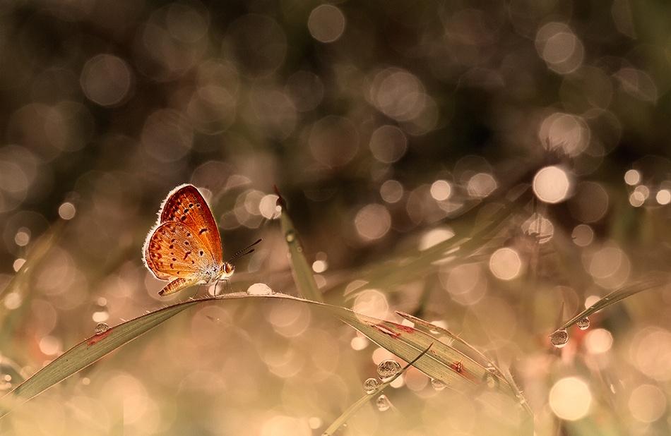 A piece of fine art art photography titled Crossing by Heri Wijaya