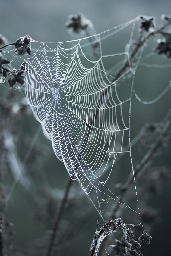 A piece of fine art art photography titled Morning Web by Frank Steinmann