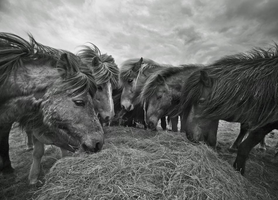 A piece of fine art art photography titled Untitled by Ragnheidur Arngrimsdottir