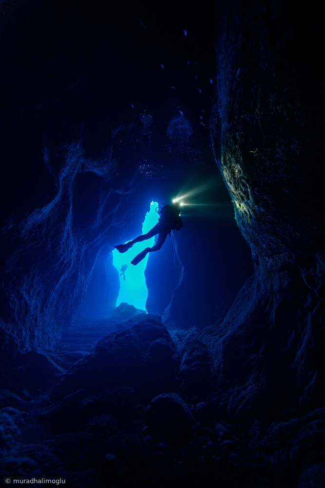 View this piece of fine art photography titled the alien to cave shrimps by murad halimoglu