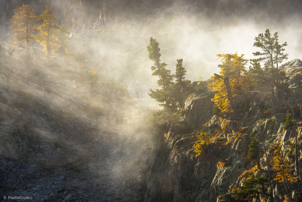 Larches of Valcuca
