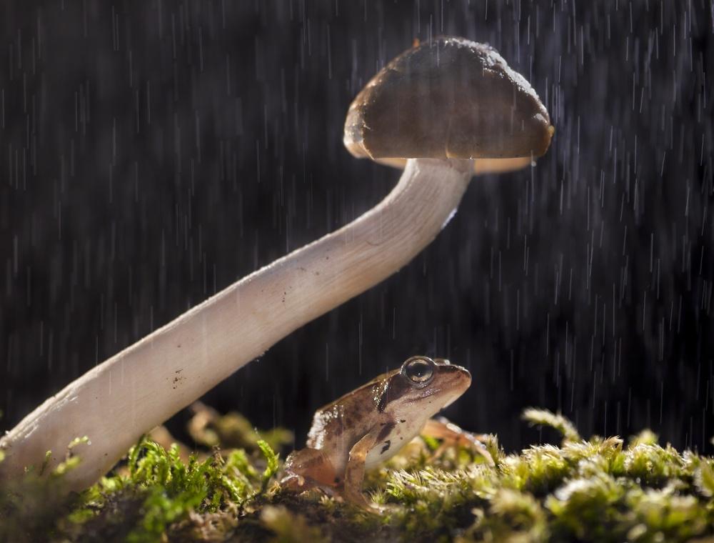 A piece of fine art art photography titled Natural Umbrella by Ferdinando valverde