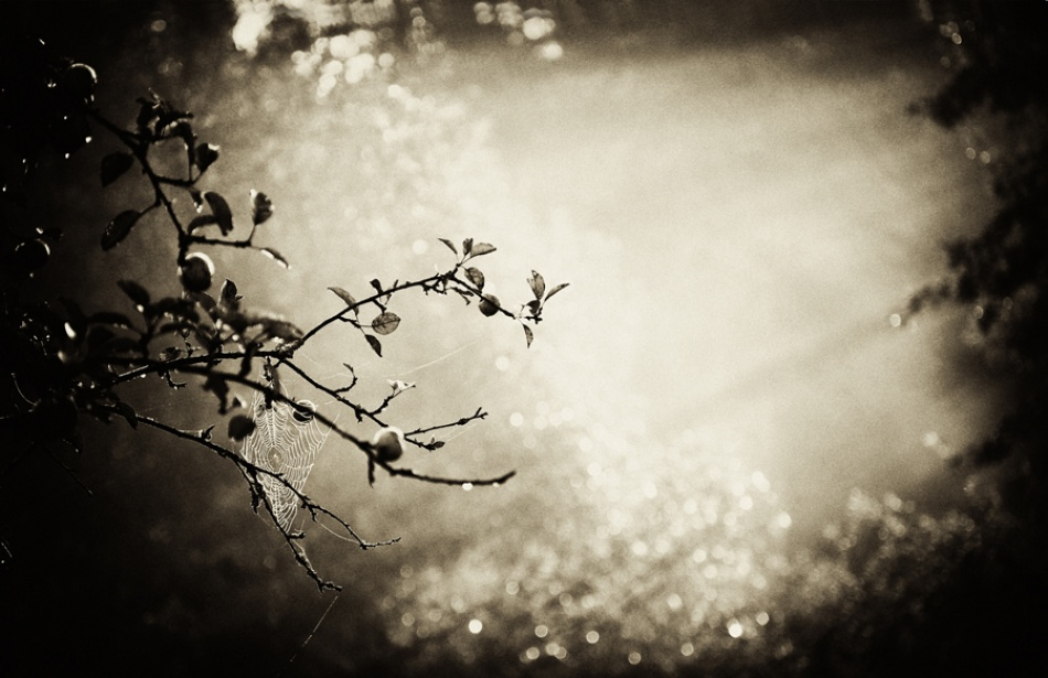 A piece of fine art art photography titled Where Are You Snow White by Barbara