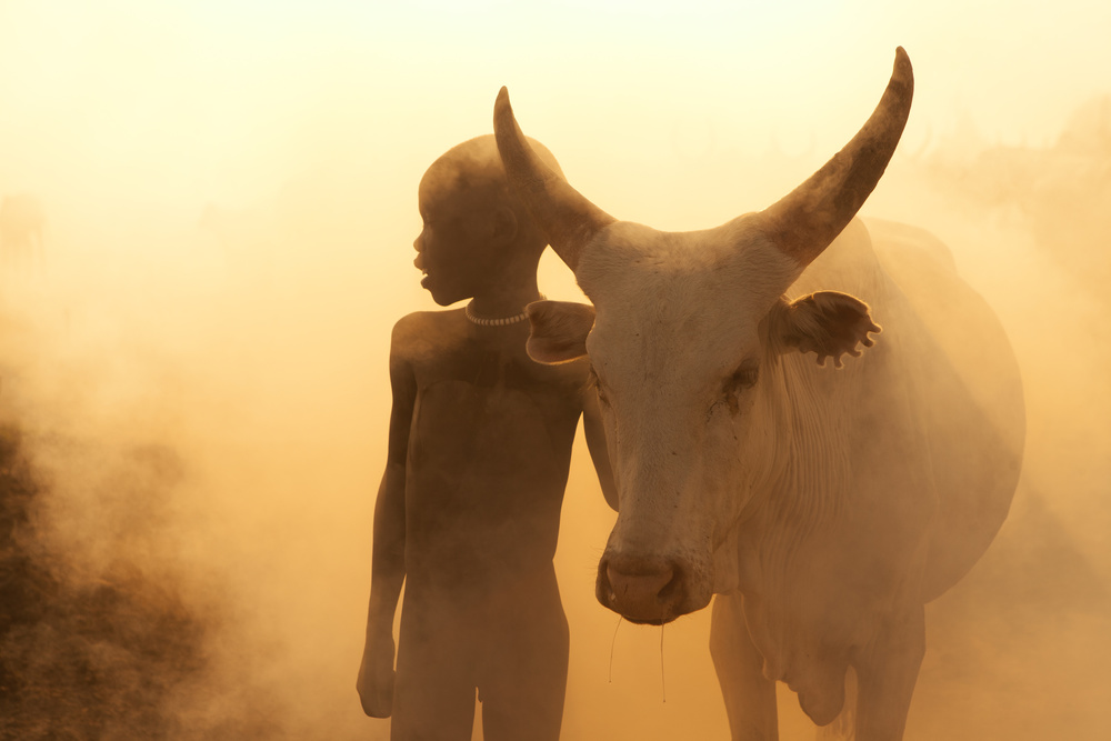 View this piece of fine art photography titled Boy of Cattle by Ali Ayer