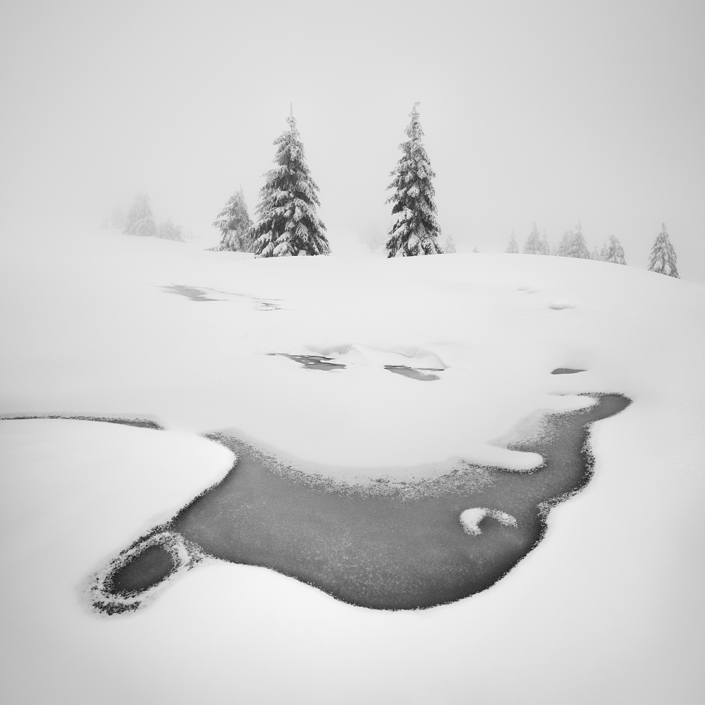 A piece of fine art art photography titled Frozen Swamps by Daniel Řeřicha
