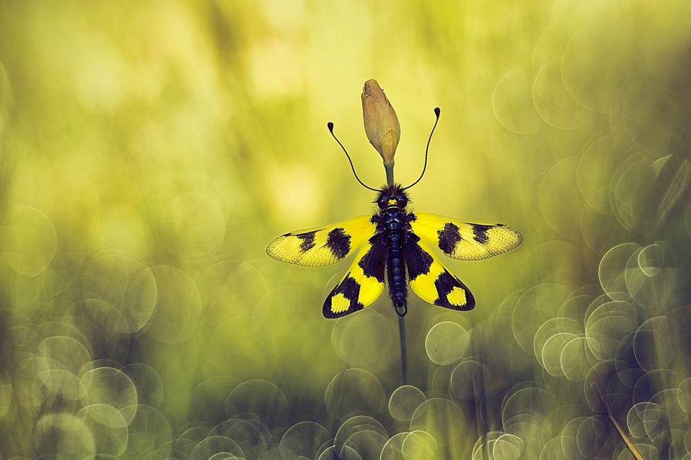 Woven wings