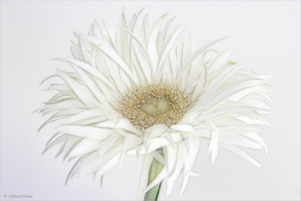 Frivolous Flower