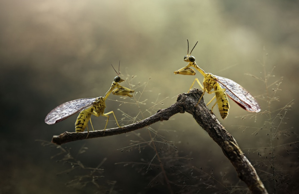A piece of fine art art photography titled Both More Fun by yoline santosa