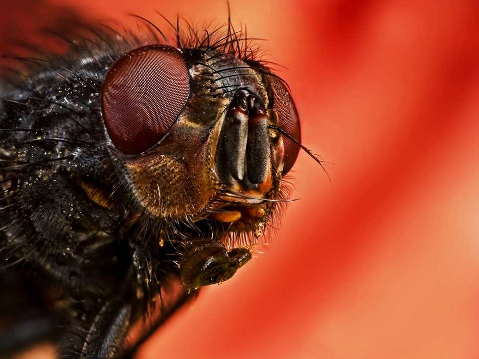 A piece of fine art art photography titled The Fly ( the Red Version ) by M.Alkhamis
