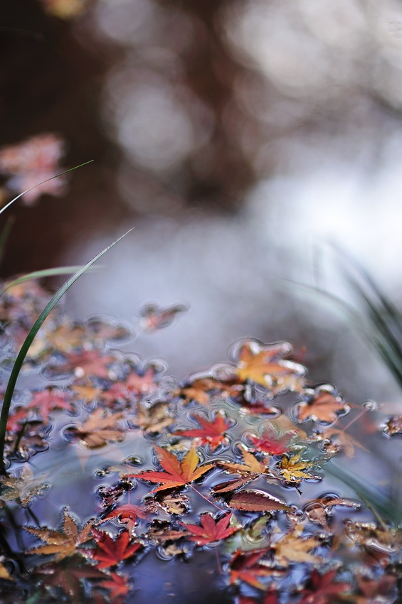 A piece of fine art art photography titled Autumn Present by Takashi