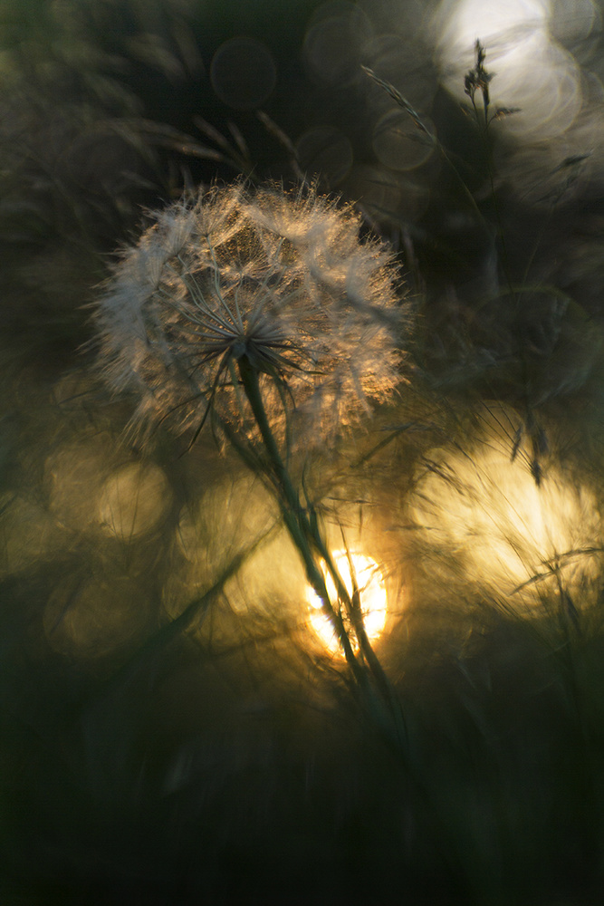 View this piece of fine art photography titled Untitled by Vera Tchernyh