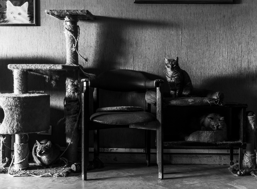 A piece of fine art art photography titled Cats by Biagio Salerno