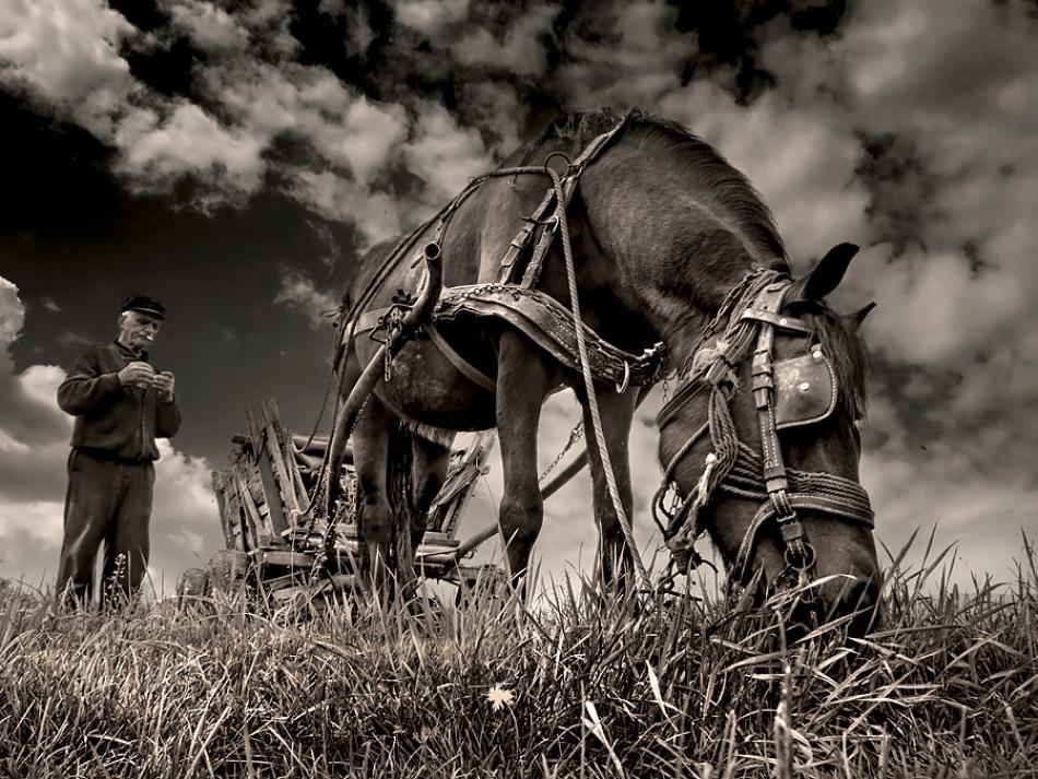 Hay collectors