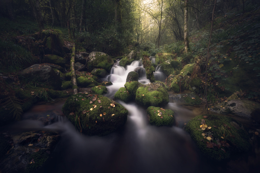 A piece of fine art art photography titled Magical Forest by Antonio Prado Pérez