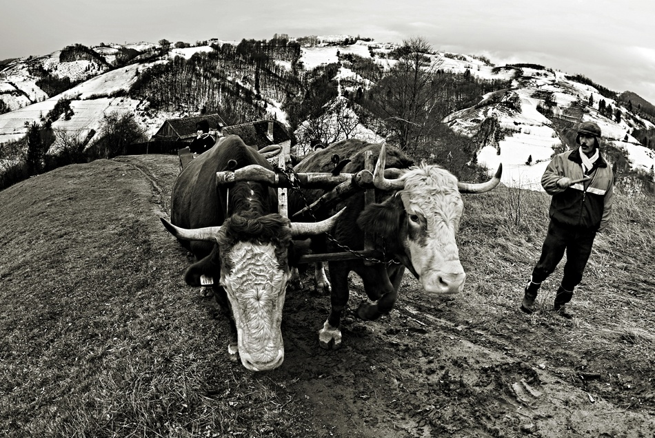 A piece of fine art art photography titled Carry On the Whole Hill by Mihaela Gradinaru