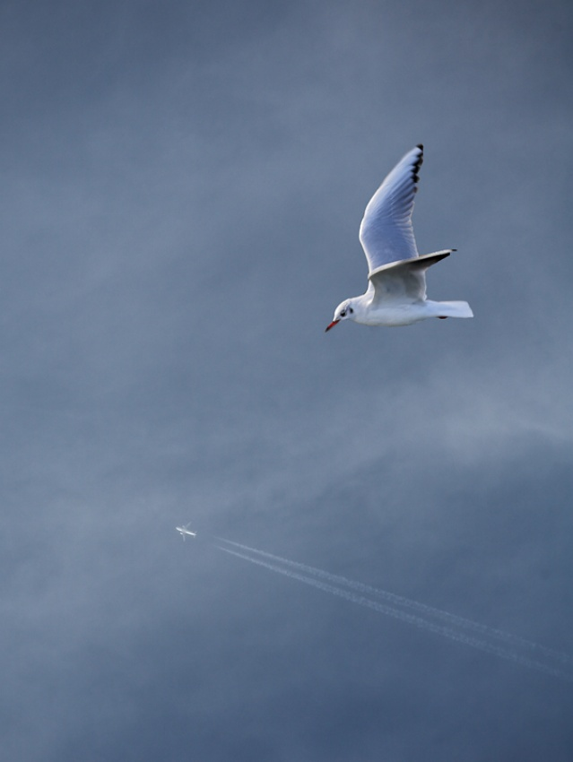 A piece of fine art art photography titled The Plane by Joël Le Montagner