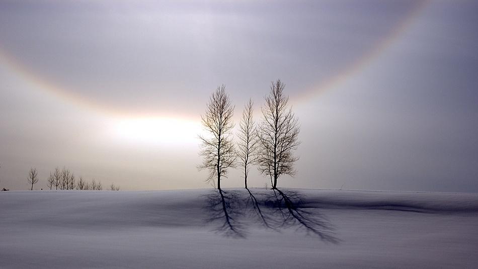 """A halo of """"Family's tree"""""""