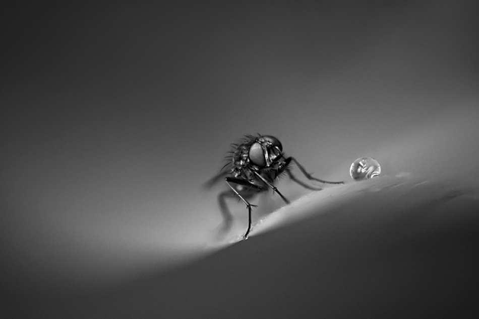 A piece of fine art art photography titled El Diablo Is Black by Cath Schneider