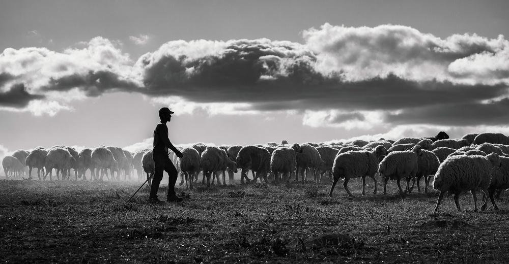 A piece of fine art art photography titled Shepherd by Yavuz Pancareken