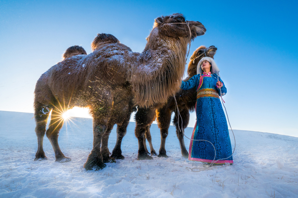 Girl and camels