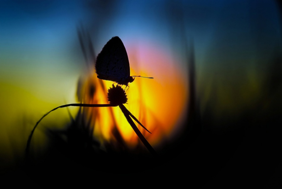 A piece of fine art art photography titled My Sunset Will Go On by Nordin Seruyan