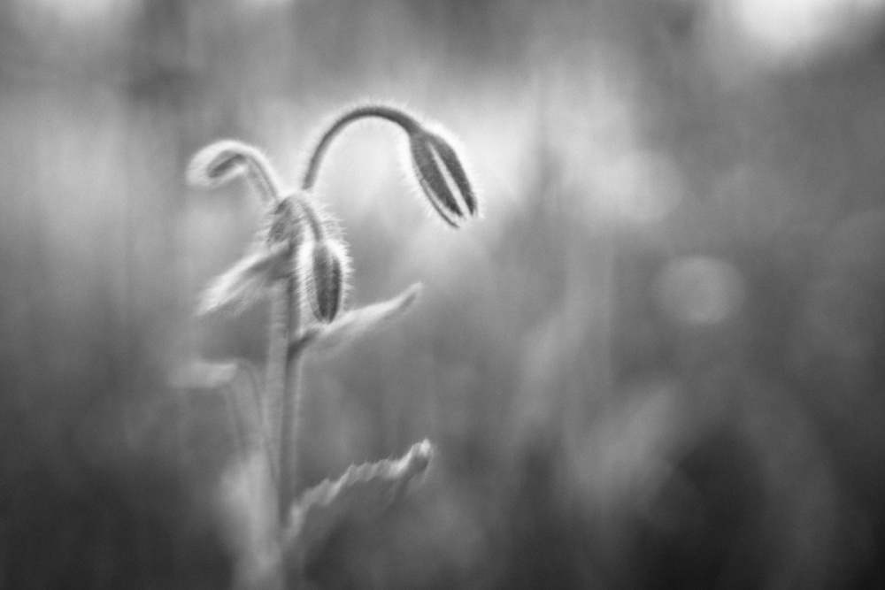 A piece of fine art art photography titled Breathing the Light by Anne Rose Pretorius