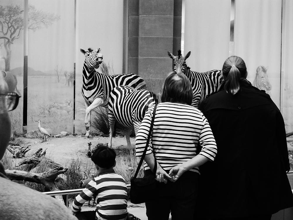 A piece of fine art art photography titled Stripes by Alex von Sachse