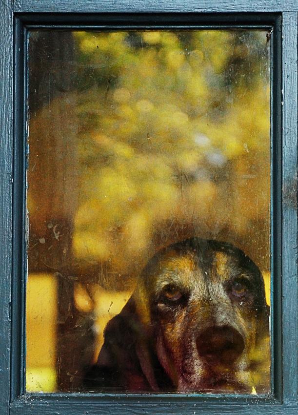 A piece of fine art art photography titled Golden Girl by Bill Mangold