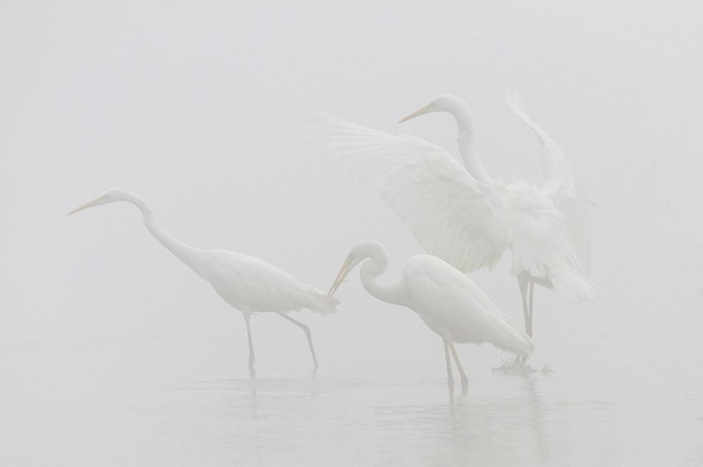 A piece of fine art art photography titled Rhythms of Nature by Robert Radomski