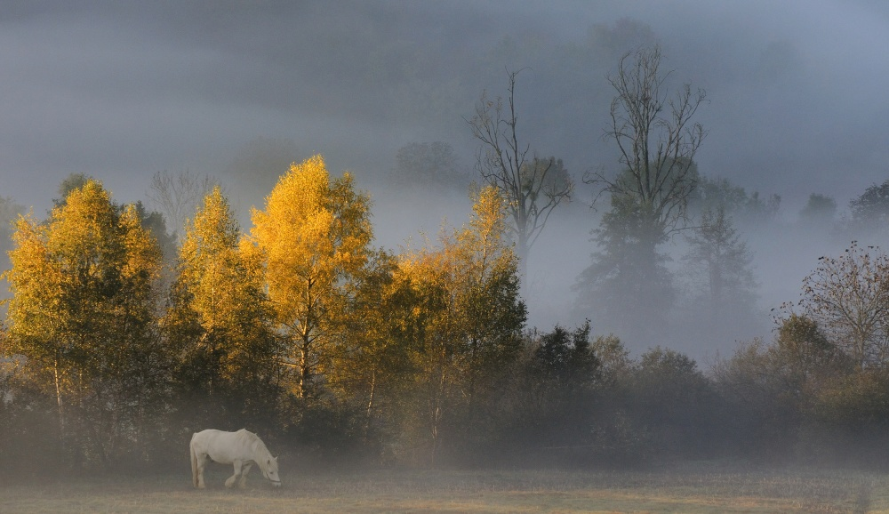 A piece of fine art art photography titled White Horse In Autumn by Muriel Vekemans