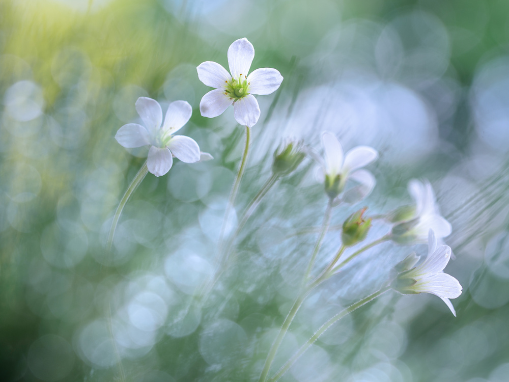 View this piece of fine art photography titled Floral joy by Bastien Riu