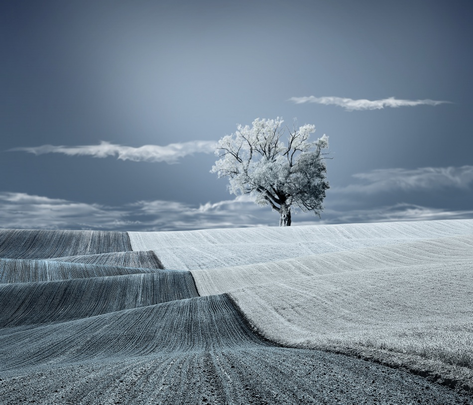 A piece of fine art art photography titled Warm Blanket of Nature by Caras Ionut