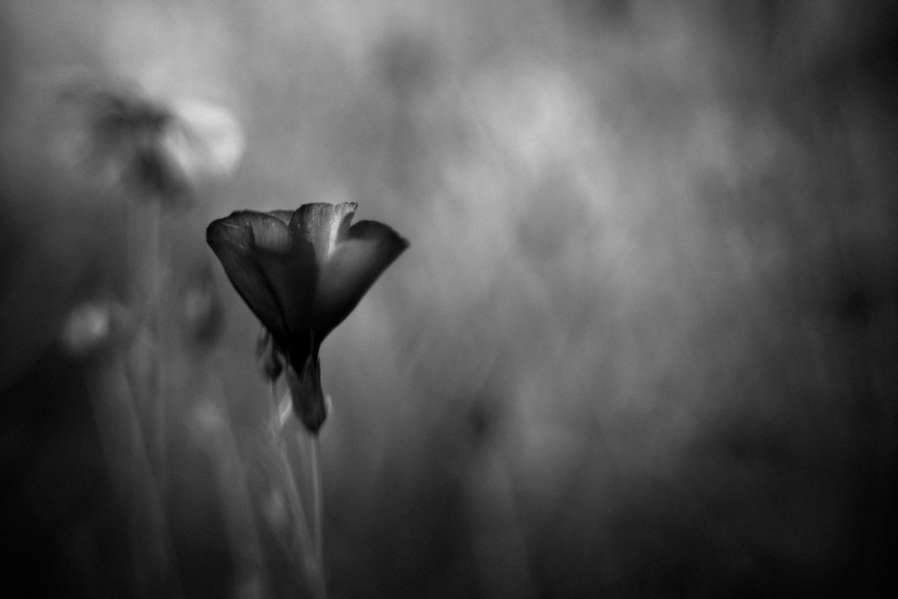 A piece of fine art art photography titled An Unspoken Word by Anne Rose Pretorius