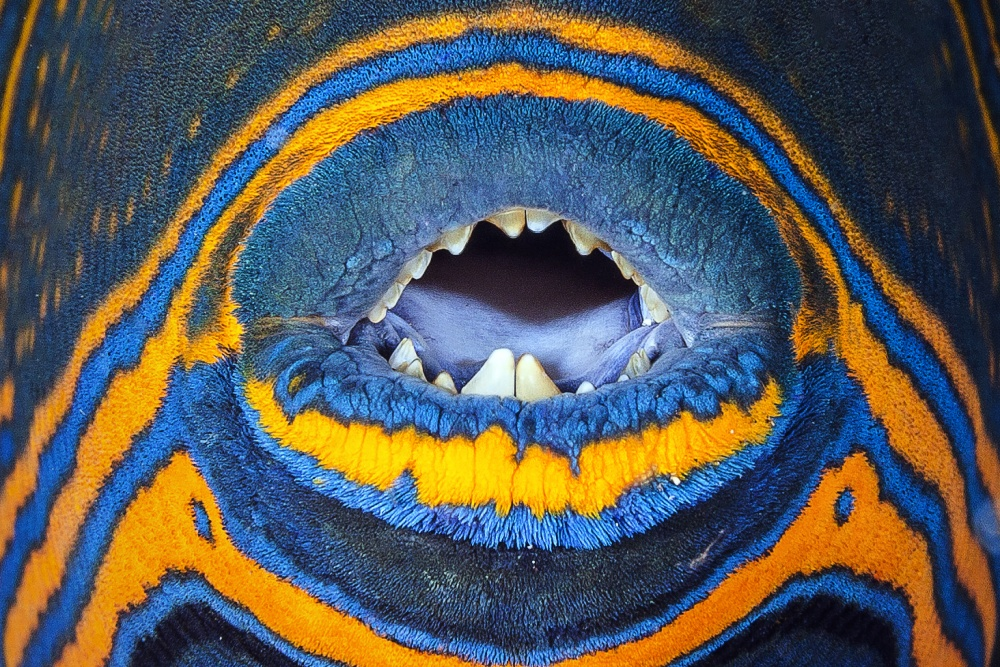 A piece of fine art art photography titled Triggerfish Mouth by Barathieu Gabriel