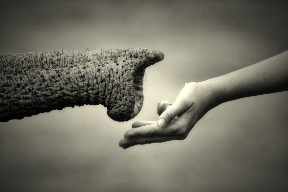 A piece of fine art art photography titled Give & Take (monochrome) by Antje Wenner-Braun