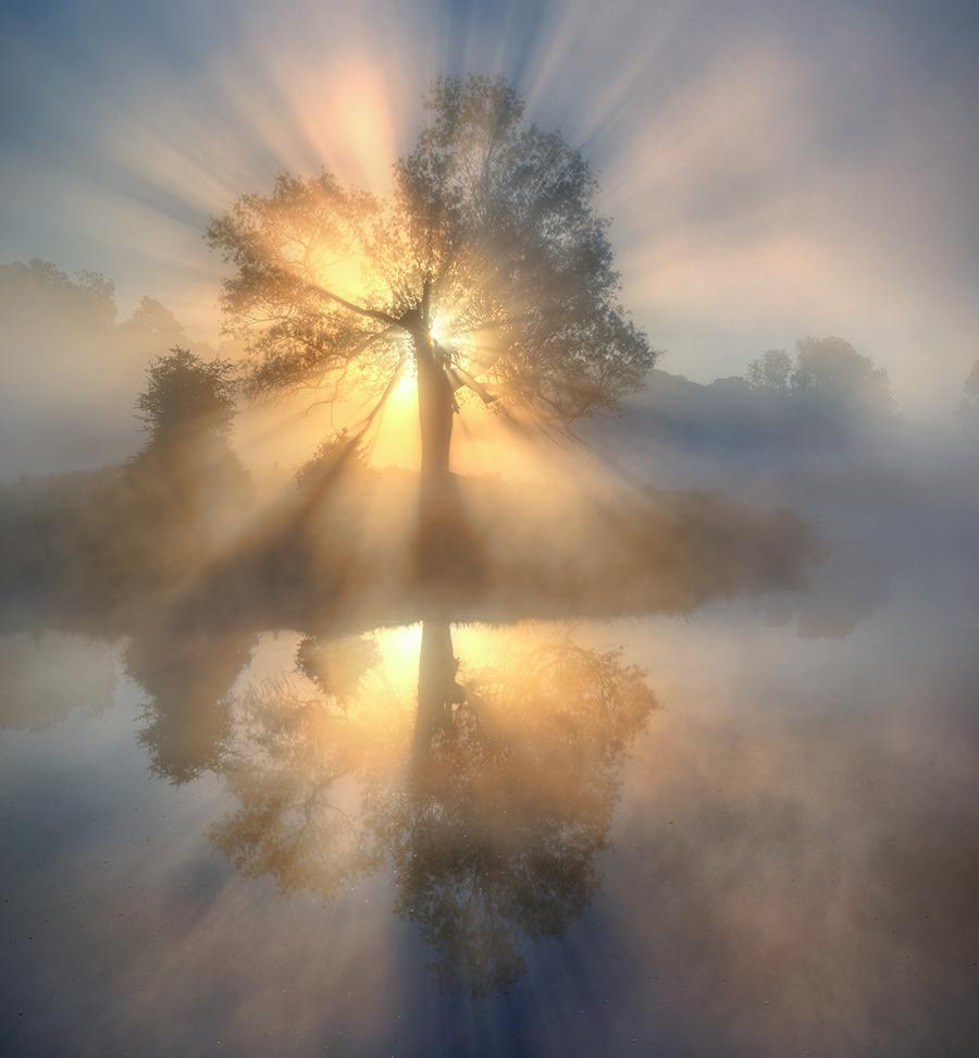 A piece of fine art art photography titled Tree of Light by keller