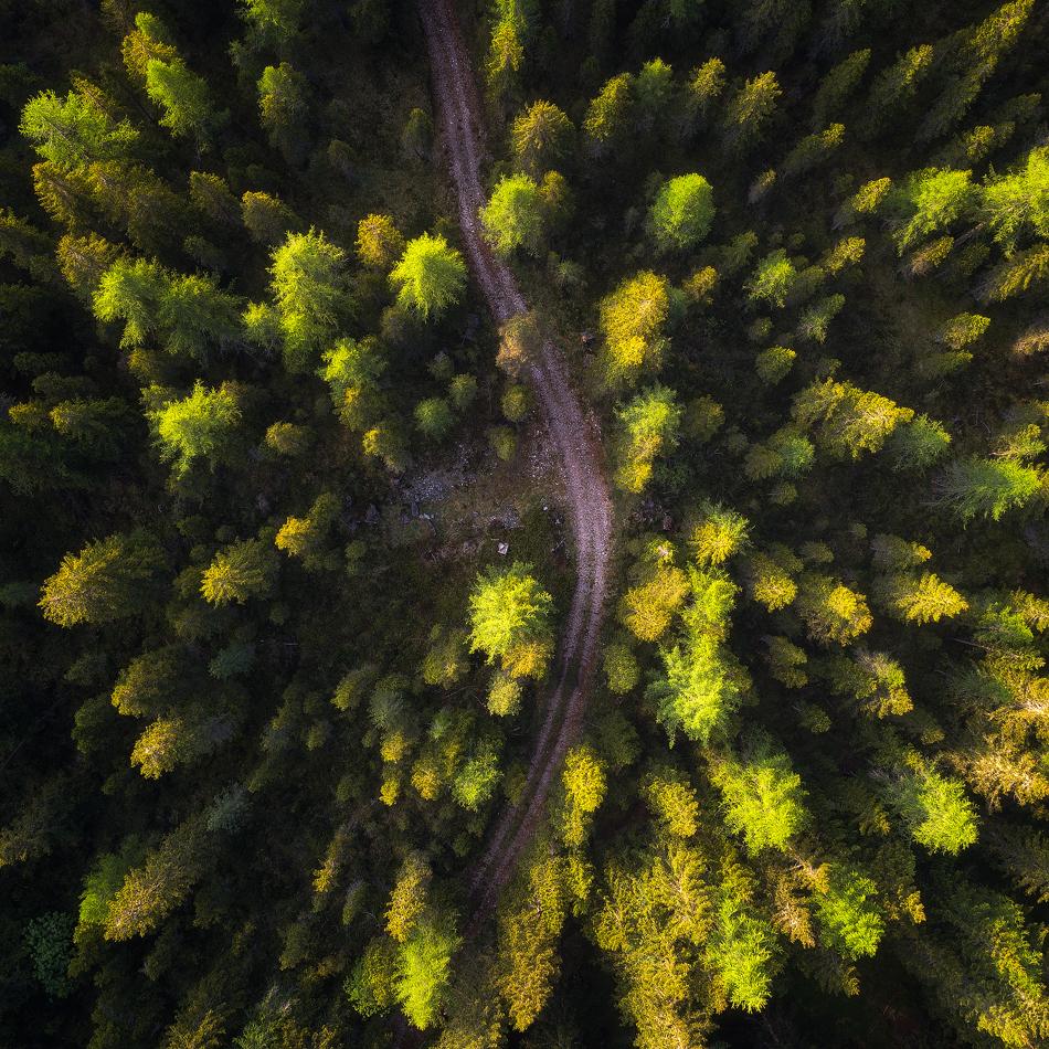 A piece of fine art art photography titled Abstract Forest View by Daniel Fleischhacker