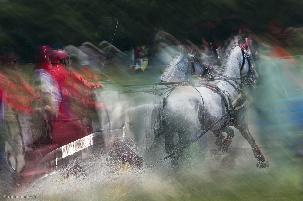 View this piece of fine art photography titled Horse pair  marathon race by milan malovrh